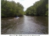 233-tour-to-mangrove-forest