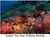 242-under-the-sea-of-nusa-penida